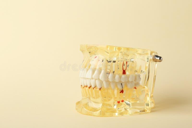 Edukacyjny model oralny zagłębienie z zębami na koloru tle zdjęcia royalty free