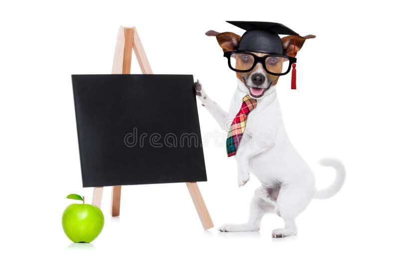 Eduque o cão imagem de stock