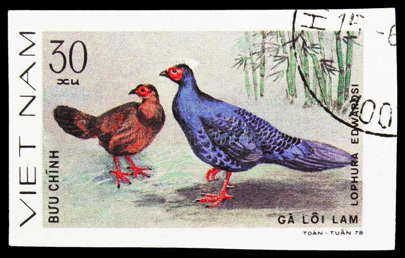 Edwards's Pheasant (Lophura edwardsi), Pheasants serie, circa 1979. MOSCOW, RUSSIA - SEPTEMBER 26, 2018: A stamp printed in Vietnam shows Edwards's Pheasant ( stock image