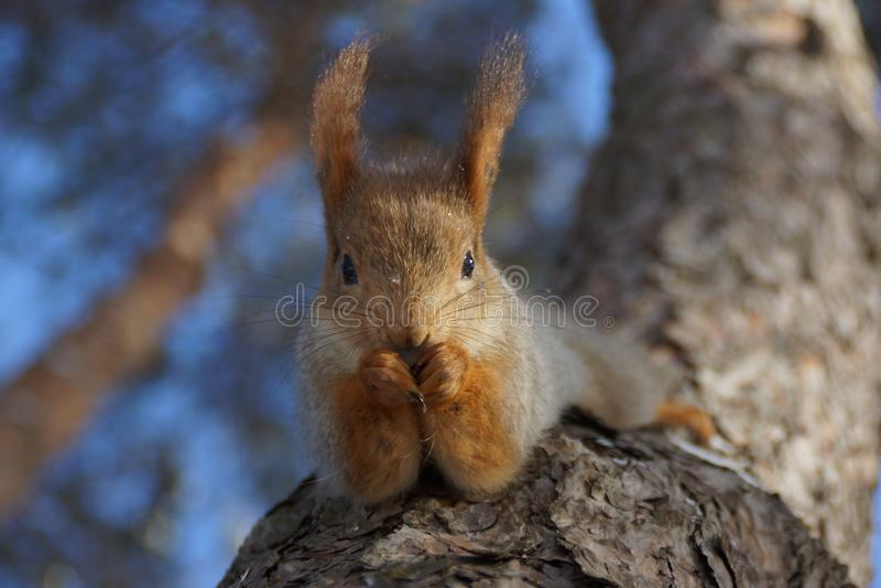 Eekhoorn in het park royalty-vrije stock fotografie