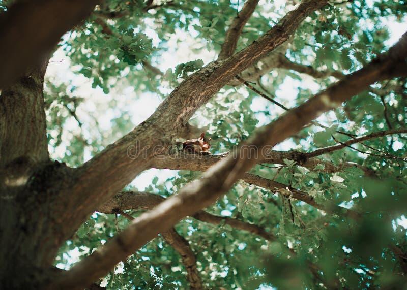 Eekhoorn op een boom in Londen royalty-vrije stock afbeeldingen