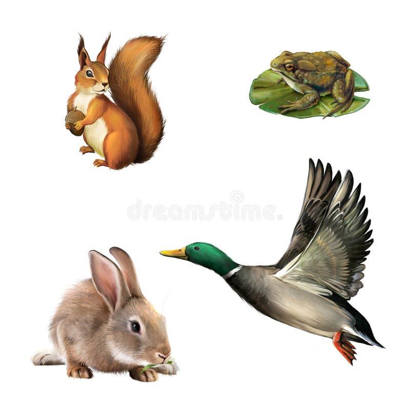 Eekhoorn, pad, konijn en mannetjeseend vector illustratie