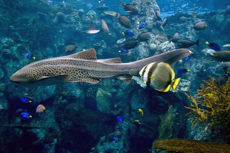 Download Eel stock photo. Image of roatan, travel, showing, underwater - 12057694