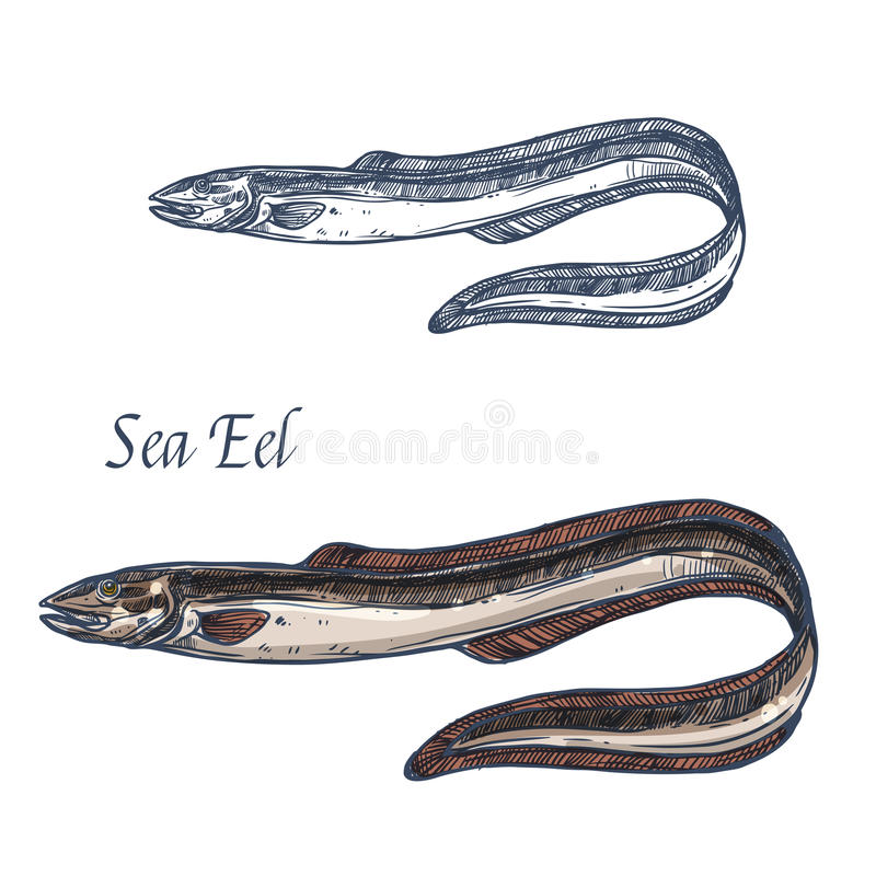 Sea eel fish vector sketch icon. Eel fish vector sketch icon. sea or river eel species. Isolated marine fauna animal symbol for zoology, seafood or fish food vector illustration