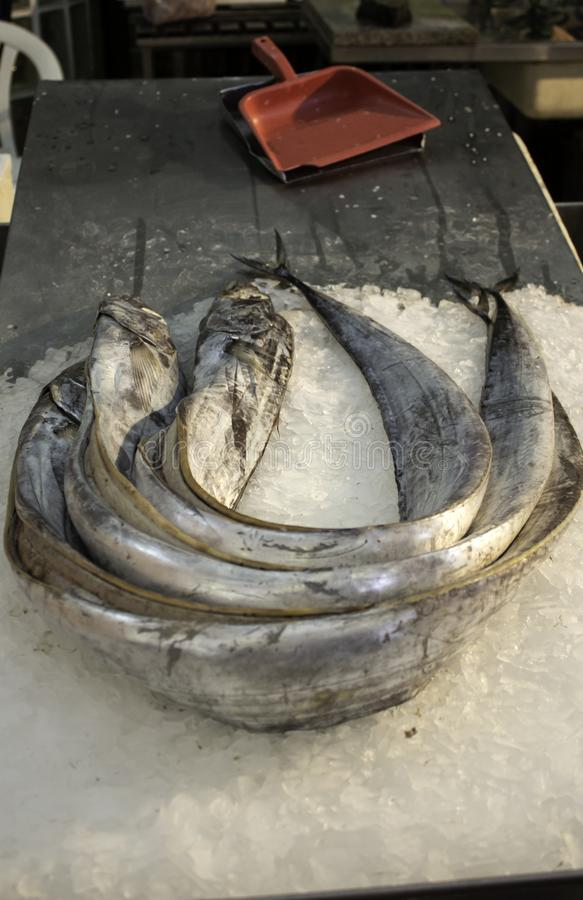 Eels in fish shop. Eels in fish counter shop, food and market stock image