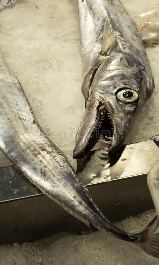 Eels in fish shop. Eels in fish counter shop, food and market stock photography