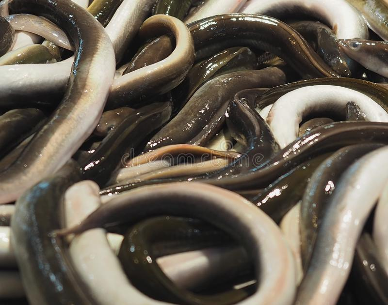 Eels For Sale In Faro Portugal. Eels for sale at indoor market in the Algarve in Faro Portugal royalty free stock photo