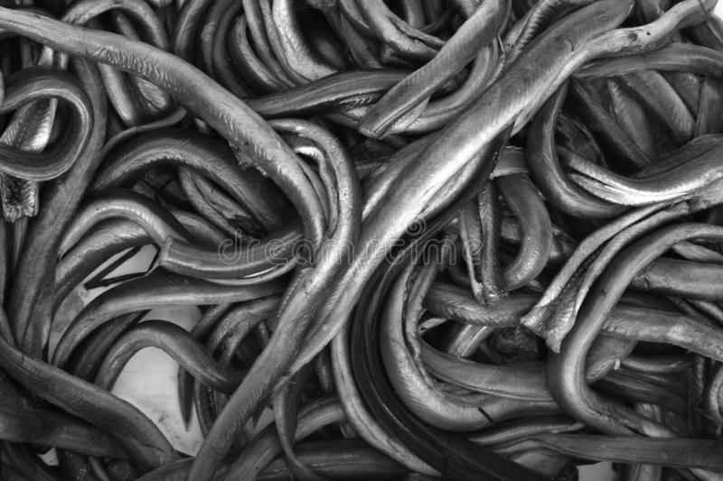 Eels. Stack of many eels on a market in Denmark royalty free stock photo