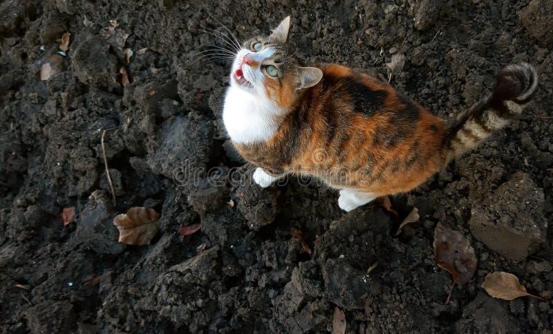 Een aanbiddelijke kattenmiauw en het wachten op voedsel royalty-vrije stock foto
