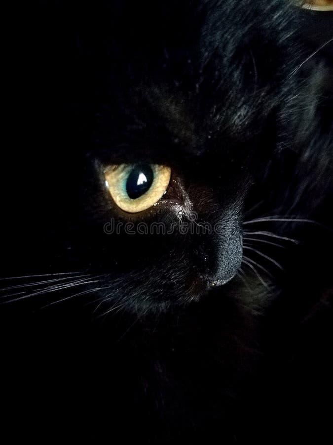 Een aandachtige waarnemer de kat stock afbeelding