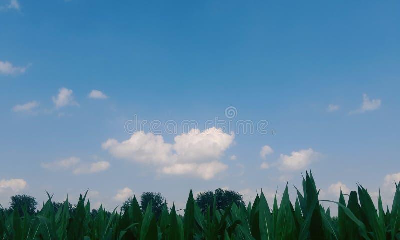 Een aanraking van groen stock foto