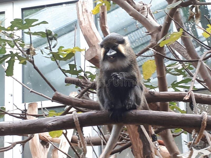 Een aap stock foto