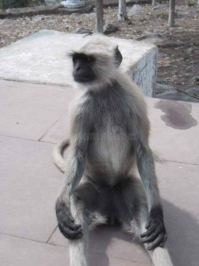 Een aap stock afbeelding