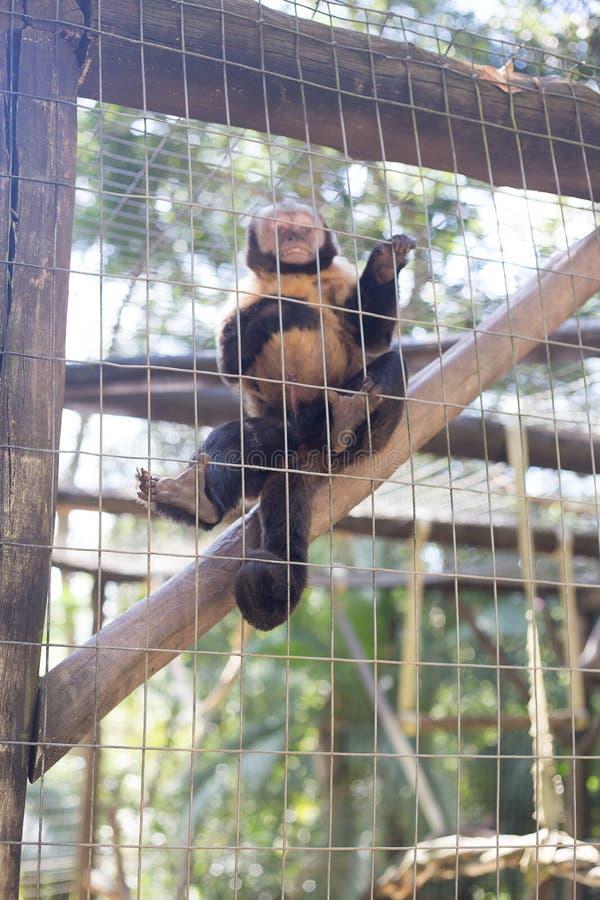 Een aap in de kooi stock foto
