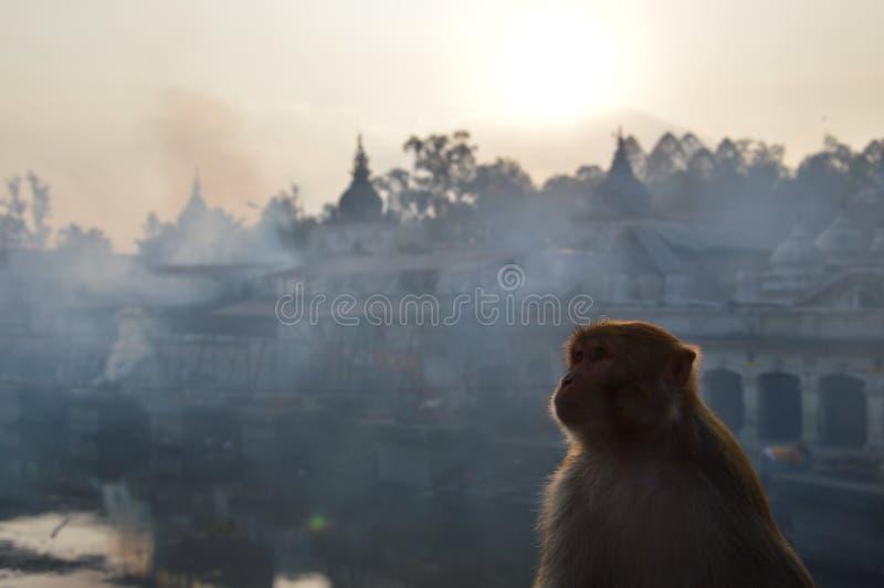 Een aap die omhoog met de tempels, ghats en rook van Pashupatinath, Katmandu, Nepal kijken stock afbeelding
