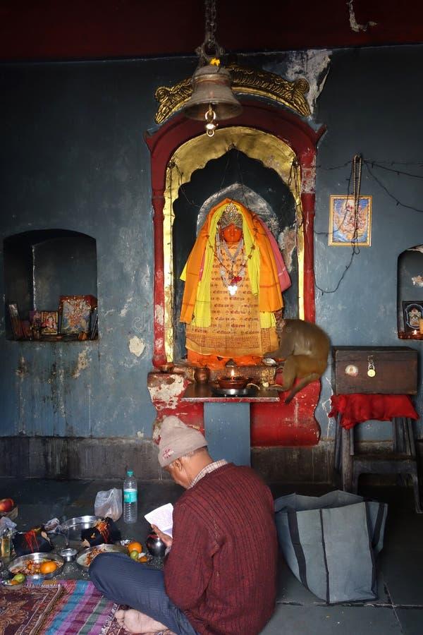Een Aap geniet van de Vruchten die bij Hindoese Tempel worden aangeboden royalty-vrije stock foto