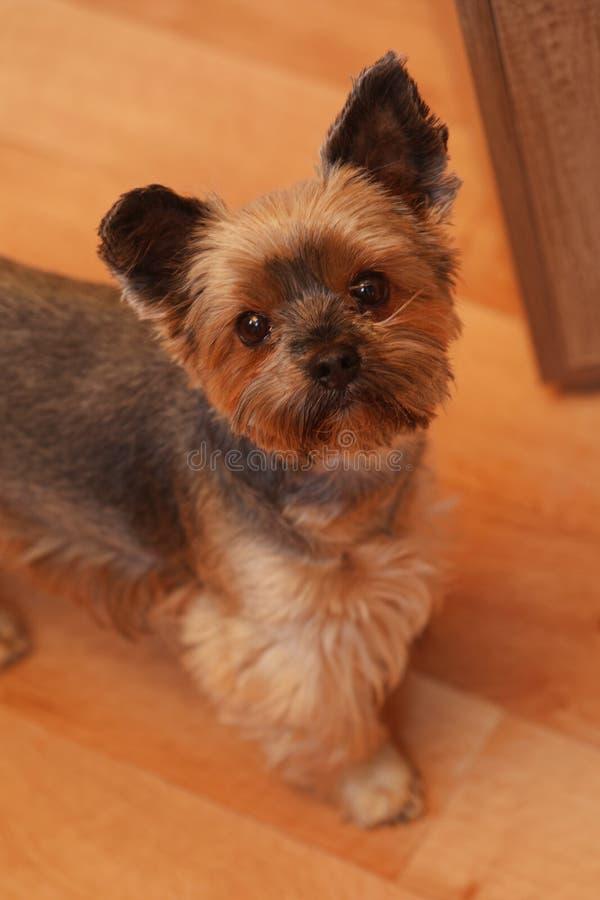 Een aardige hond ziet eruit royalty-vrije stock foto