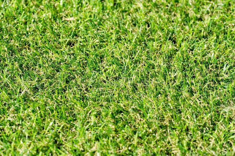 Een achtergrond van groene bladeren stock fotografie