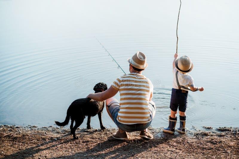 Een achtermening van vader met een kleine peuterzoon en een hond die in openlucht door een meer vissen royalty-vrije stock afbeeldingen