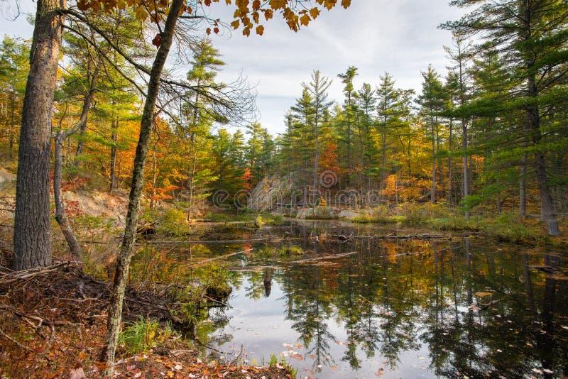Een afgezonderde die vijver door de herfstkleur wordt omringd stock afbeelding