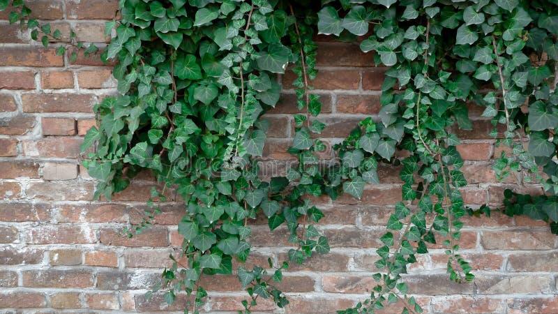 Een andere green op de muur stock fotografie