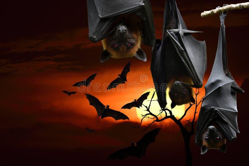 Een angstaanjagend half-jarig feest met rode ogen hangende vleermuizen, horrorfestival royalty-vrije stock foto