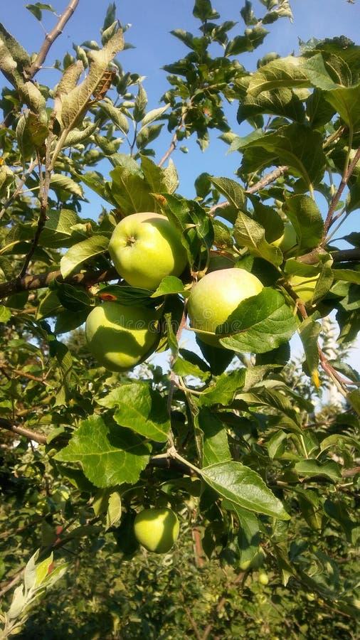 Een appel een dag… stock foto