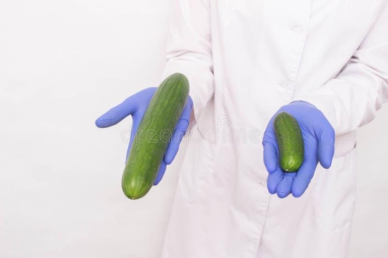 Een arts in medische handschoenen houdt twee verschillende met maat komkommers Concept stijgende penis bij mensen, ligamentotomy stock foto