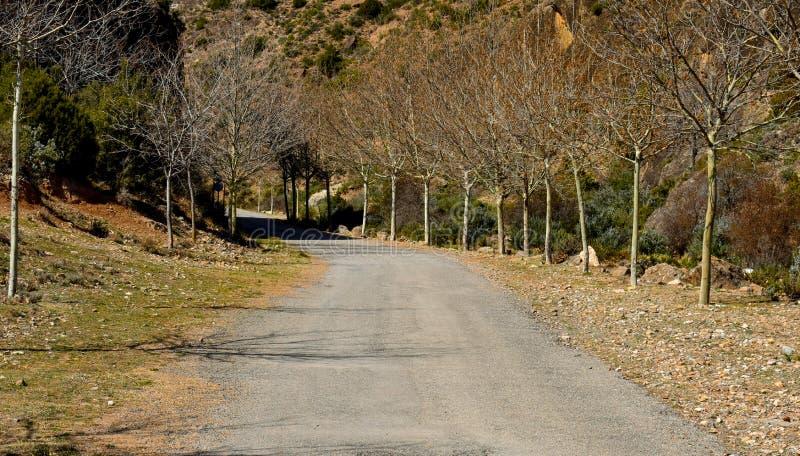 een asfaltweg in het midden van het platteland met twee boomlijnen zonder bladeren aan beide kanten van de weg zonder voertuigen royalty-vrije stock afbeeldingen