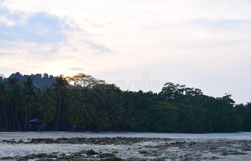 Een Avond bij Strand tijdens Eb met Kokospalmen en Heldere Hemel - Vijaynagar-Strand, Havelock-Eiland, Andaman-Eilanden, India stock foto's