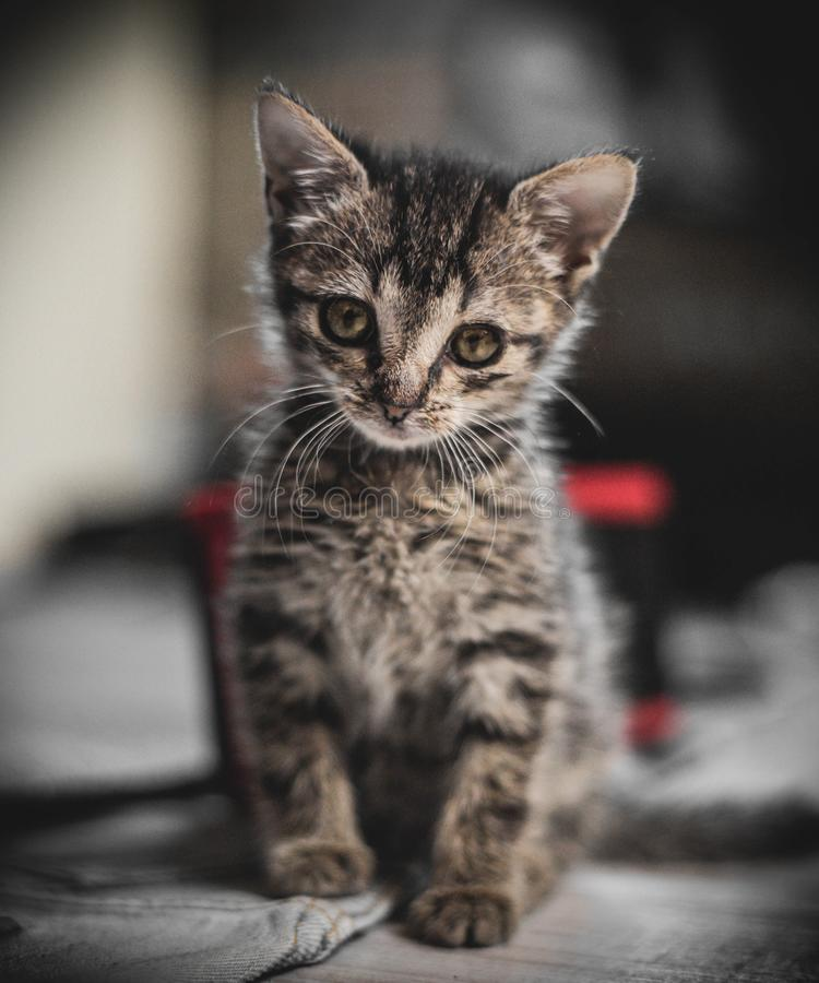 Een babykat met zoete blik stock foto's