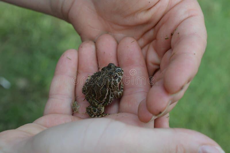 Een babypad in een kleine jongenshand royalty-vrije stock afbeelding