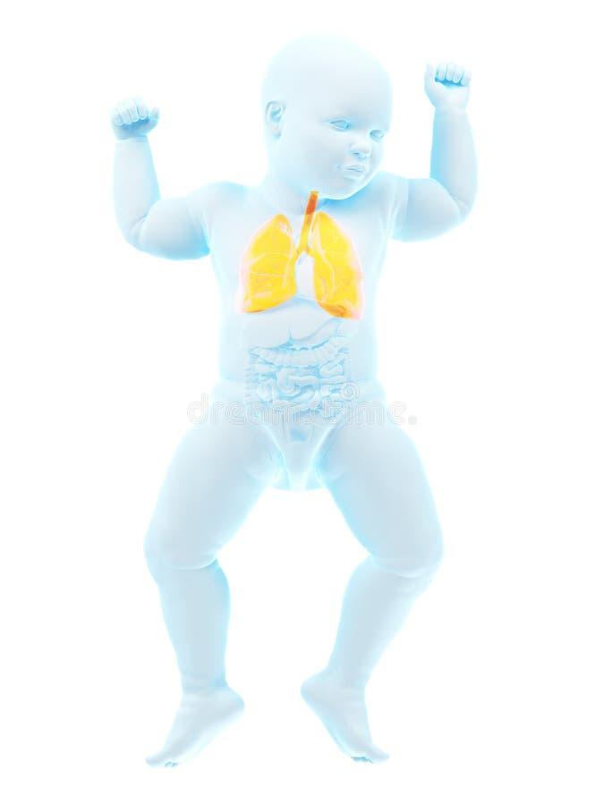 Een babysmaag royalty-vrije illustratie