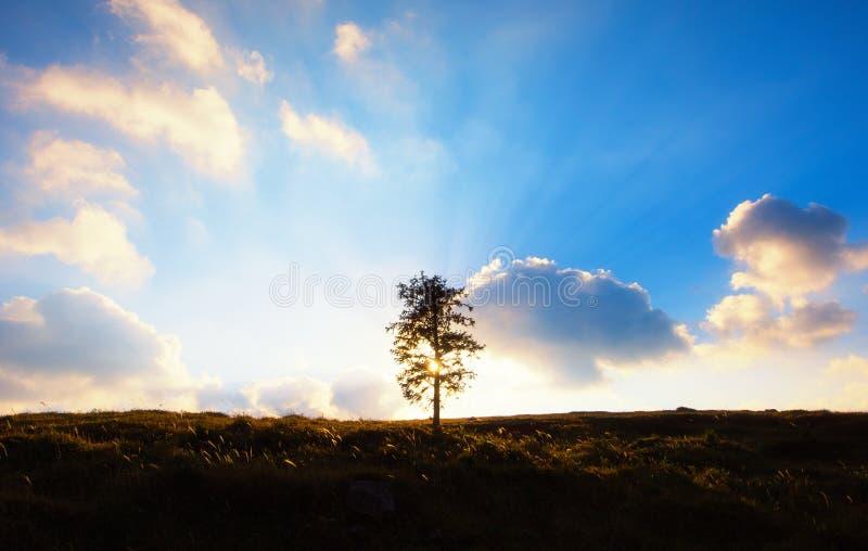 Een backlit boom stock fotografie