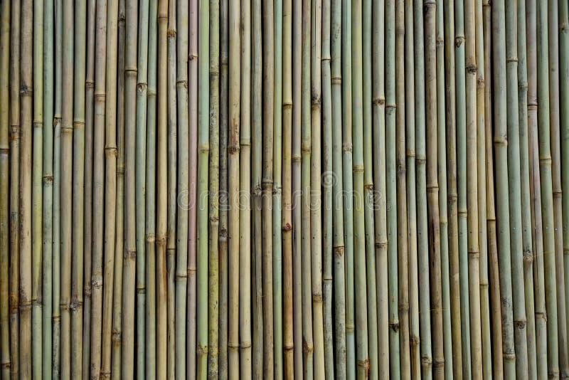Een bamboemuur, of verscheidene verticale rechte bamboestokken en texturen stock foto's