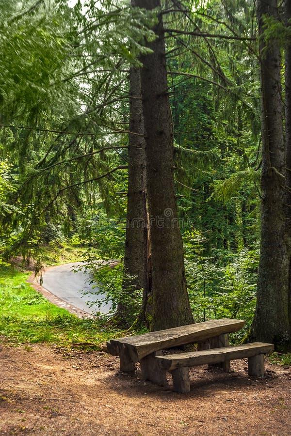 Een bank en een houten die lijst in een ceder en sparren een bosdieA weg wordt gezien in backgroud wordt gezien royalty-vrije stock afbeeldingen