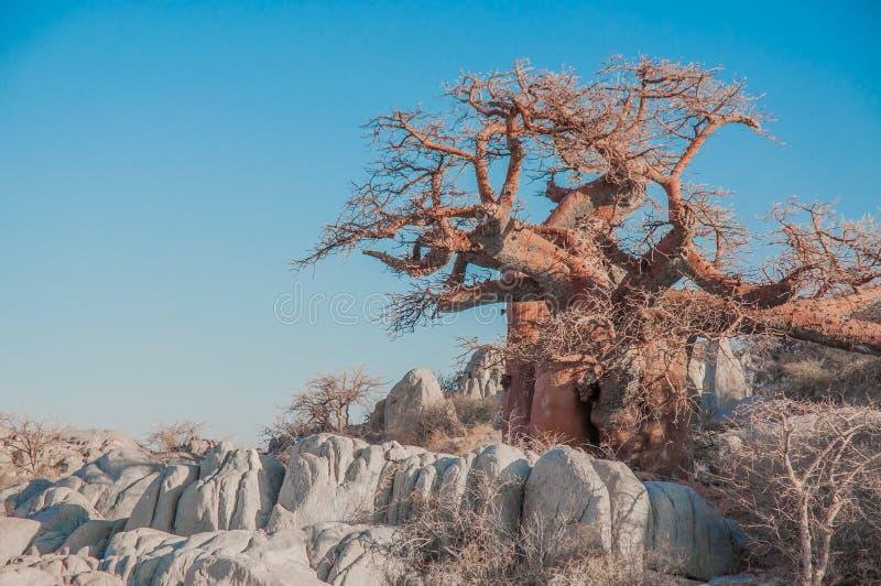 Een Baobabboom tussen Granietkeien royalty-vrije stock afbeelding