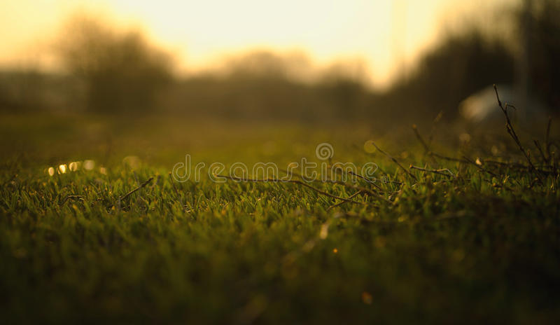 Een beautyful die macro van gras wordt geschoten stock afbeeldingen