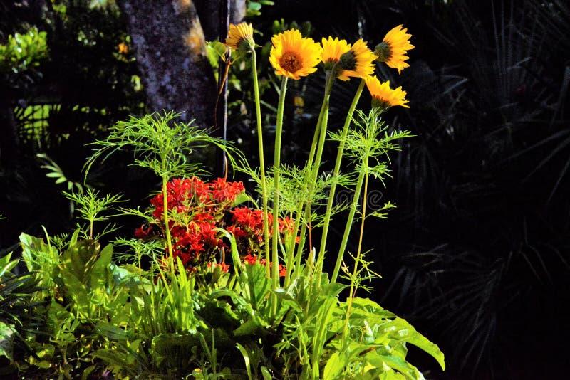 Een bed van kleurrijke wildflowers zal kolibries en vogels van alle soorten aantrekken stock afbeeldingen