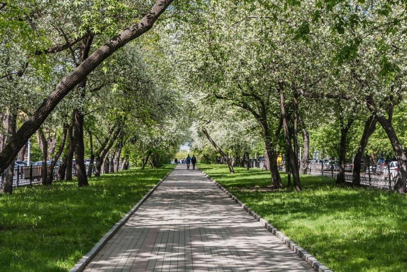 Een bedekte weg met grijze en rode het bedekken plakken met een groep mensen onder het bloeien met de witte bomen van de bloemena stock afbeeldingen