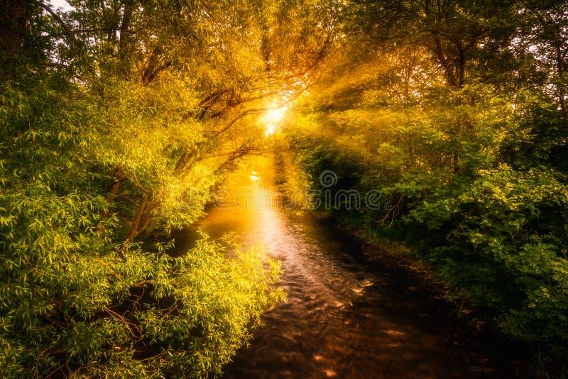 Een beek bij zonsopgang stock afbeeldingen