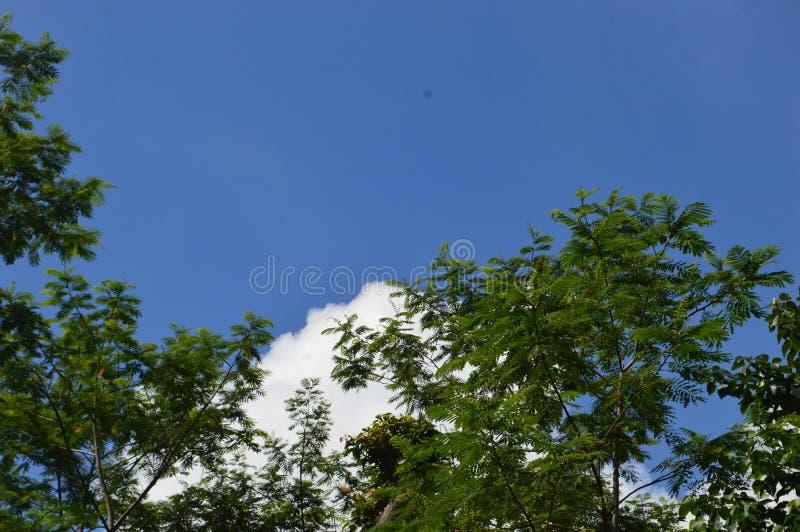 Een beeld van een boom die aan de hemel uittorende stock afbeelding