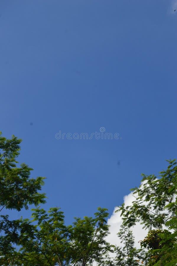 Een beeld van een boom die aan de hemel uittorende royalty-vrije stock afbeeldingen