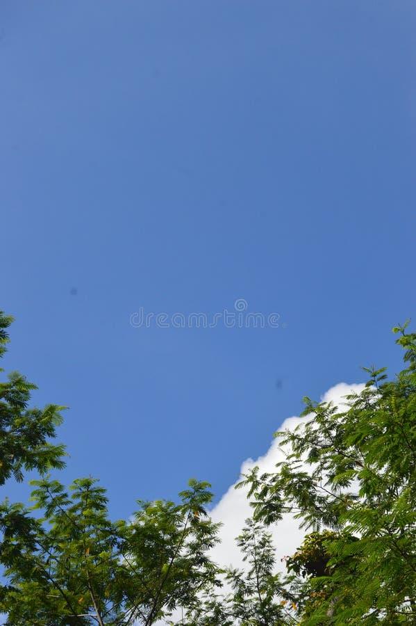 Een beeld van een boom die aan de hemel uittorende royalty-vrije stock afbeelding
