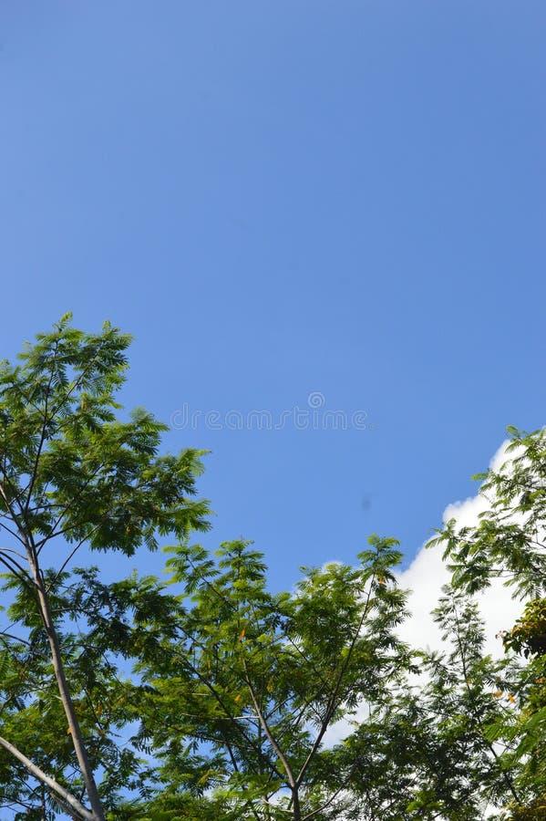 Een beeld van een boom die aan de hemel uittorende stock afbeeldingen