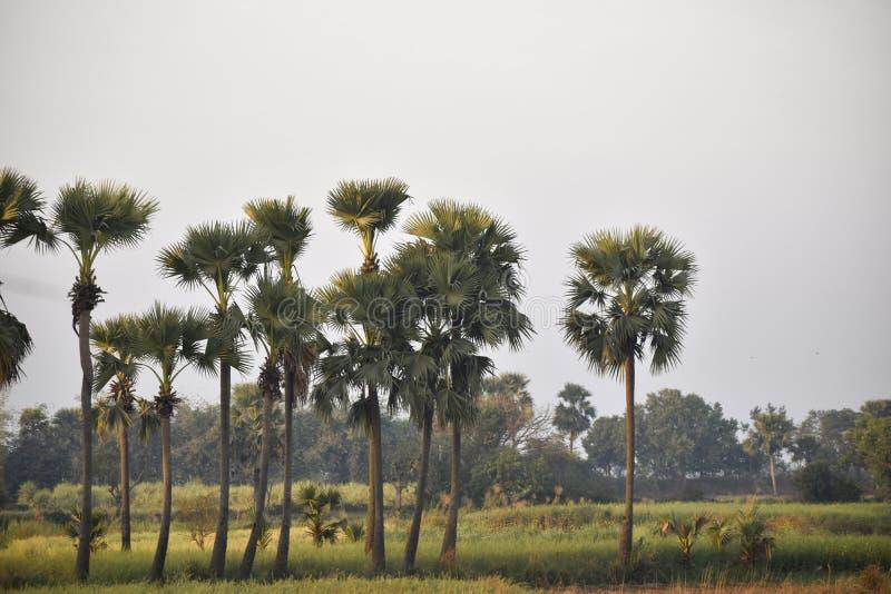 Een beeld van een mooie wildernis waar Sommige palmen stock foto