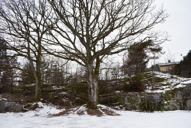 Een beeld van winterlandscape van Mos stock foto