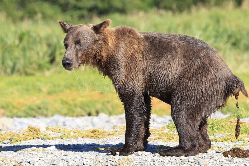 een beer in het hout stock afbeelding