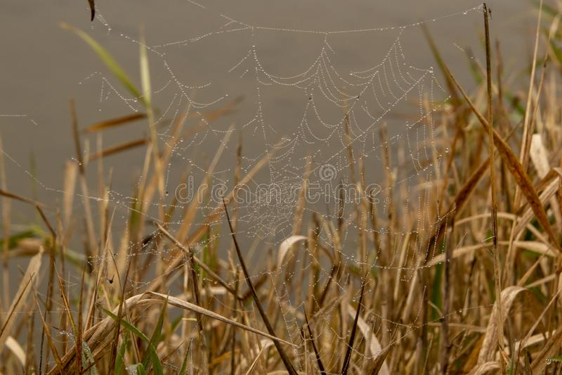 Een behandelde dauw spiderweb royalty-vrije stock fotografie