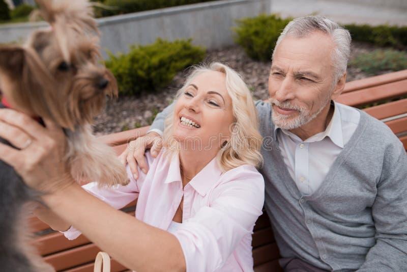 Een bejaard paar rust zitting op een bank in het vierkant Een vrouw houdt een kleine hond in haar handen royalty-vrije stock foto